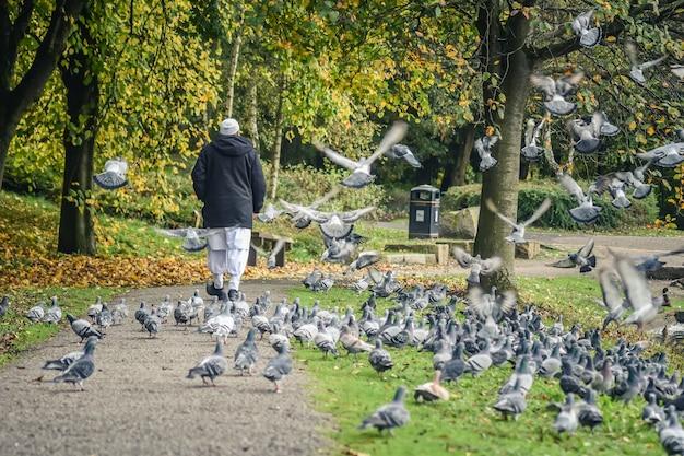 Le vieil homme entre dans le groupe des pigeons.
