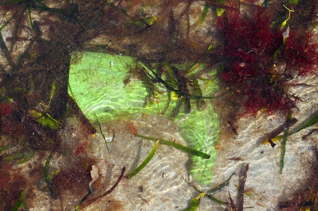 Vieille botte verte poubelle pollution de la mer