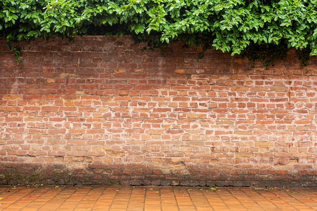 Vieille brique rouge et sol avec arbre au sommet