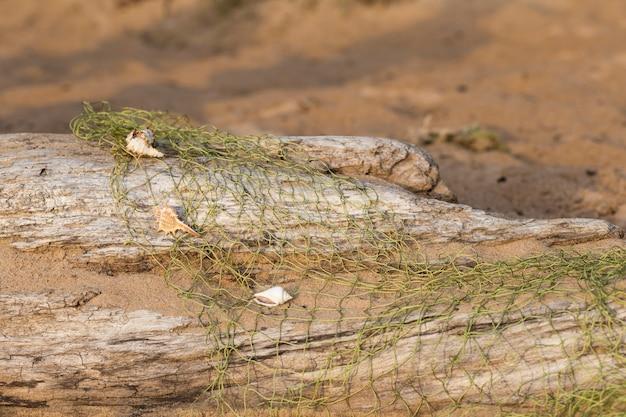 Une vieille bûche sur le sable, un filet de pêche et des coquillages dessus