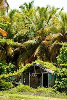 Une vieille cabane dans la forêt de palmiers.