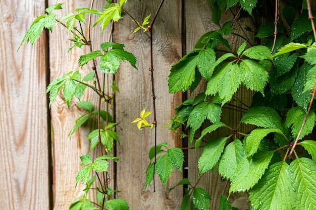 Vieille clôture en bois rustique.