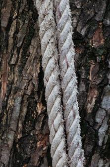 Vieille corde au tronc