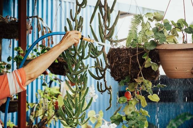 Vieille femme arrosant le jardin.