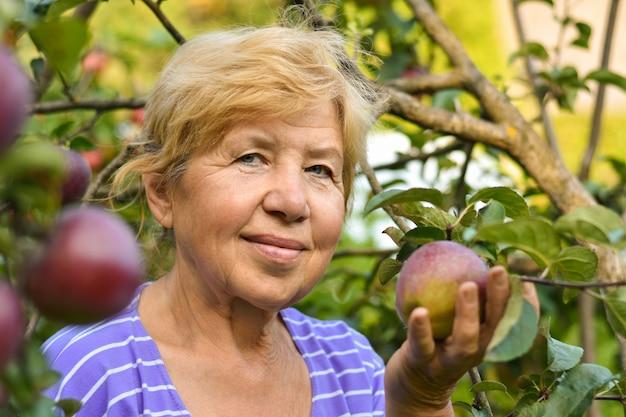 Une vieille femme souriante cueillir des pommes dans un arbre