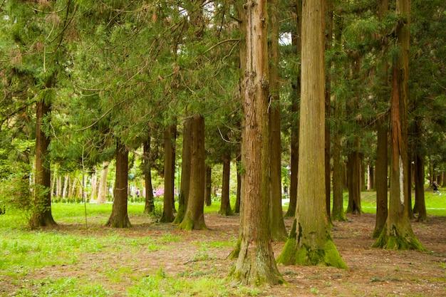 Vieille forêt de grands arbres dans le parc, jardin botanique de zugdidi en géorgie
