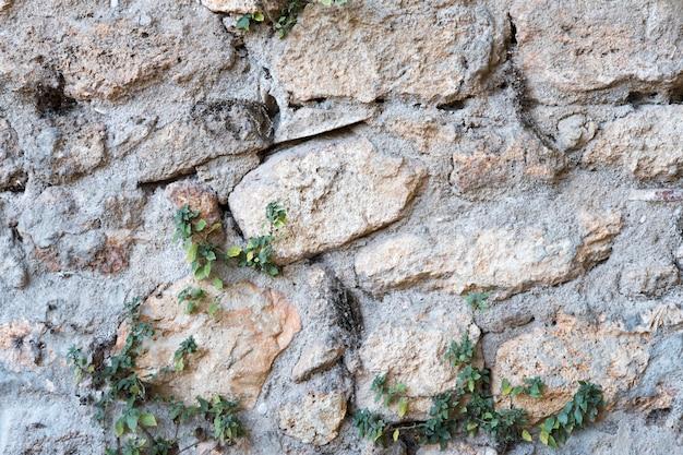 Vieille maçonnerie sur le mur avec liseron vert