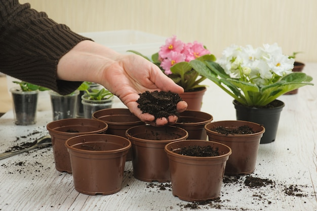 Vieille main jette le sol en pot