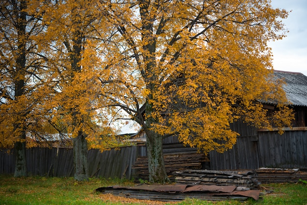 Vieille maison en bois dans le village, bouleaux, paysage de campagne en automne