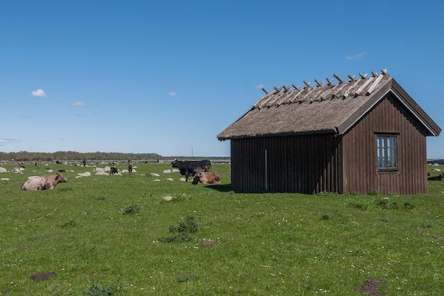 Une vieille maison en pierre se dresse sur une prairie verdoyante. oland, suède