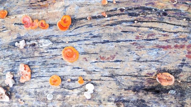 Vieille planche avec un champignon brun comme image de fond
