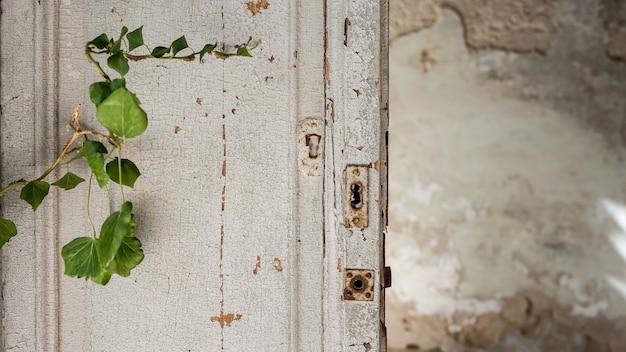 Vieille porte en bois texturé avec végétation