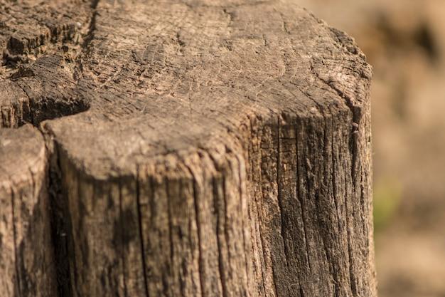 Vieille souche en bois