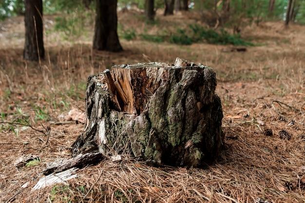 Vieille souche dans la forêt