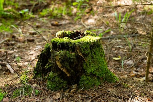 Vieille souche envahie par la mousse dans la forêt d'automne