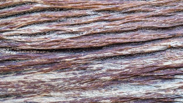 Vieille texture d'écorce d'arbre bouchent fond up.nature