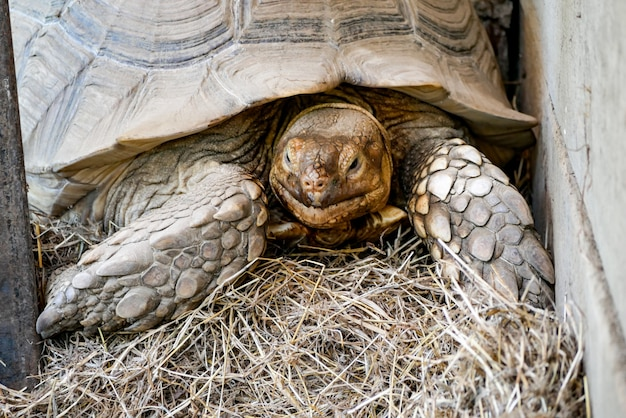 Vieille tortue brune au zoo