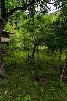Vieilles maisons de village turques en bois typiques dans un pré vert à artvin, turquie
