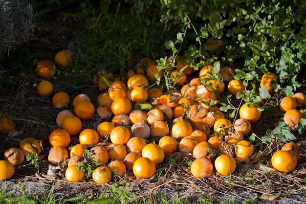 Vieilles oranges
