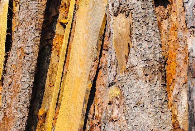 Vieilles planches en bois. motif naturel, qualitatif. texture
