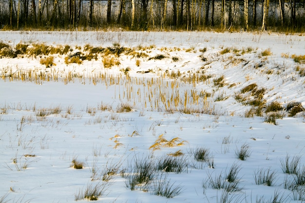 Vieilles plantes d'hiver sèches et congelées sur le terrain, gelées d'hiver pendant la saison froide