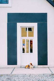 Vieilles portes blanches. texture du bois. vieille peinture irradiée minable