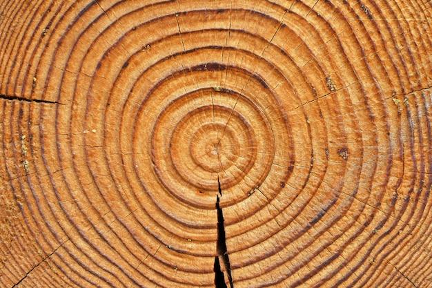 Vieux anneaux d'arbres bruns