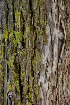 Vieux arbre texture