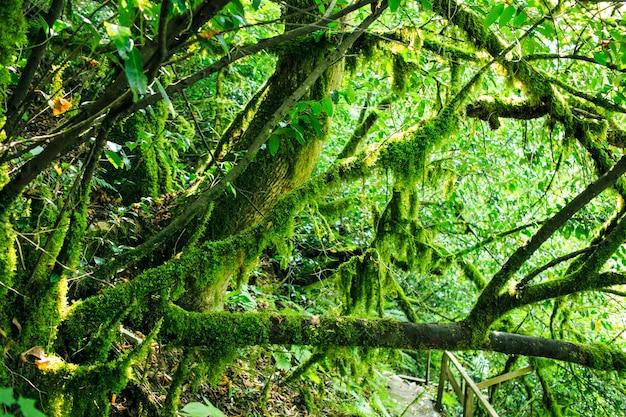 Vieux arbres avec du lichen et de la mousse dans la forêt russe