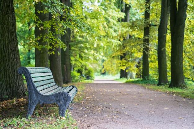 Vieux banc en bois peint dans le vieux parc d'été ou au début de l'automne matin en forêt avec des arbres verts