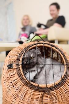 Vieux beau chat assis dans un panier d'animaux dans le contexte d'une clinique vétérinaire.
