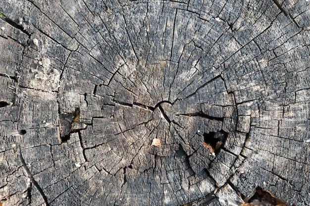 Vieux bois coupé texture anneau fond de texture