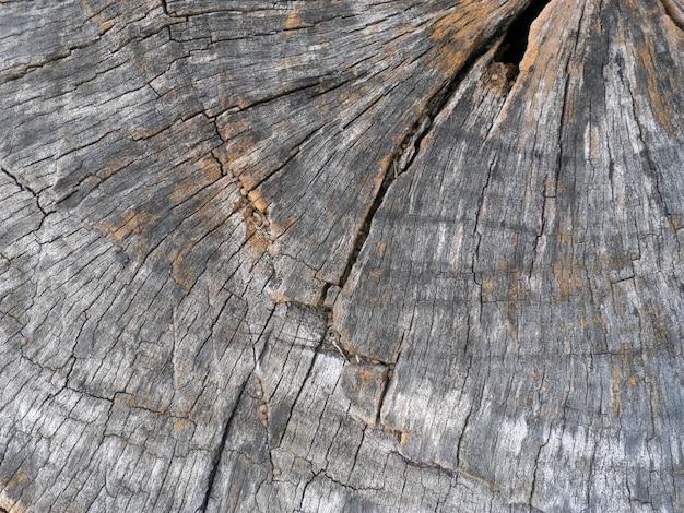 Vieux bois fissuré