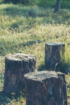Vieux bois avec des fleurs dans la belle pelouse.