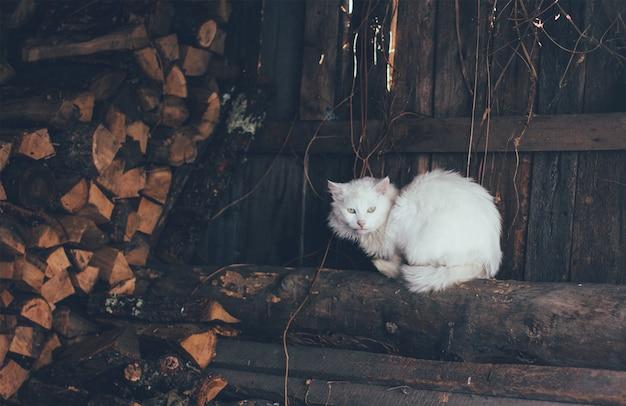Vieux chat blanc assis sur des bûches dans le bûcher