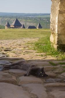 Un vieux chat errant gris se trouve sur le trottoir en pierre les tours de l'ancienne forteresse sont visibles je