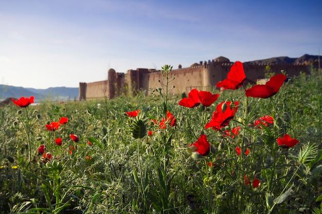 Vieux château au kazakhstan. forteresses murs nomades