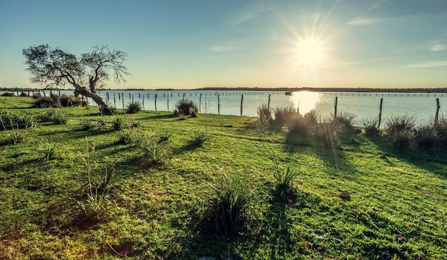 Vieux chêne-liège (quercus suber) sur les rives du lac avec la lumière du soleil du matin