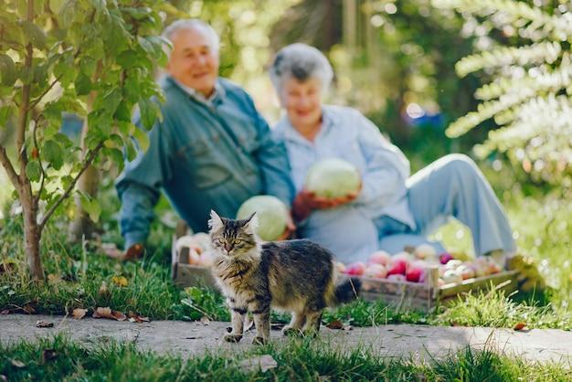 Vieux couple assis dans un jardin d'été avec récolte