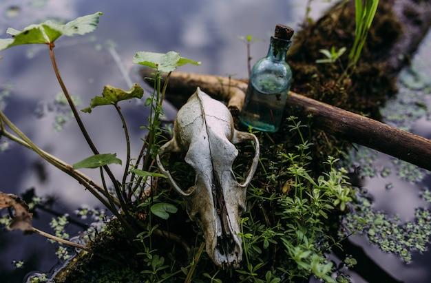 Vieux crâne de chien et atmosphère sombre et mystérieuse de la forêt enchantée