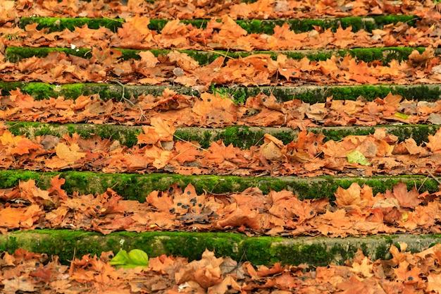 Vieux escaliers parsemés de feuilles d'automne