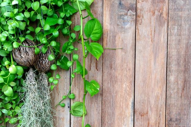 Vieux fond de clôture en bois avec feuille verte