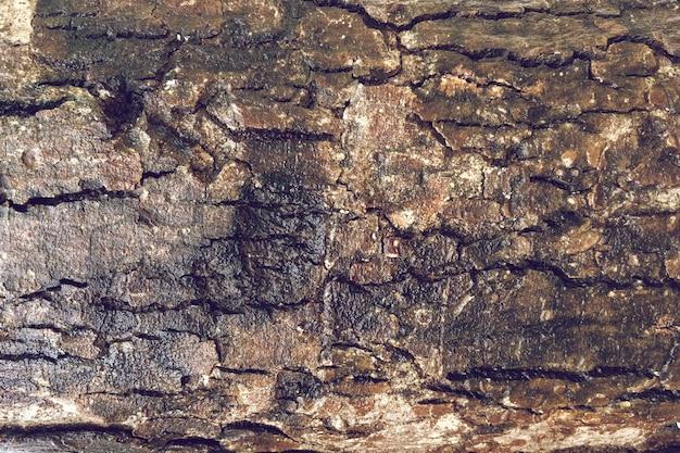 Vieux fond de texture d'arbre détaillé