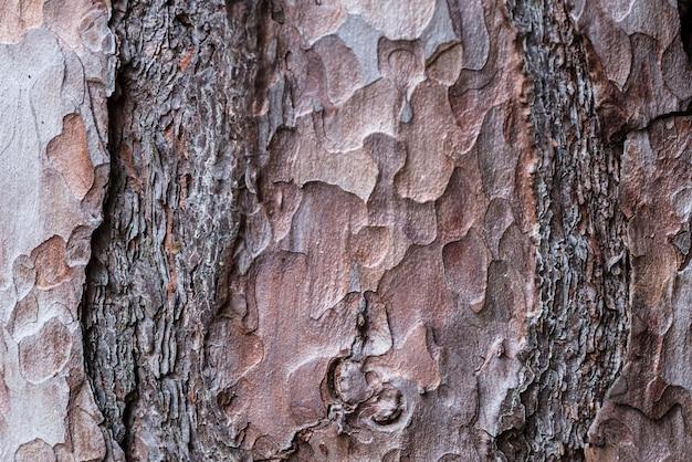 Vieux fond texturé en bois vintage