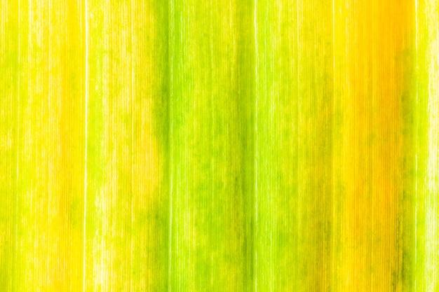 Vieux fond de texture de feuilles de bananier coloré