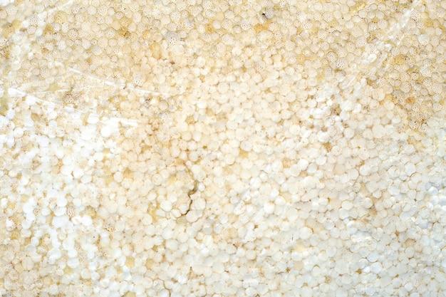 Vieux fond de texture de mousse de polystyrène
