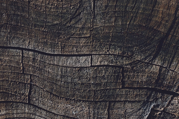 Vieux fond de texture de souche d'arbre fissuré.
