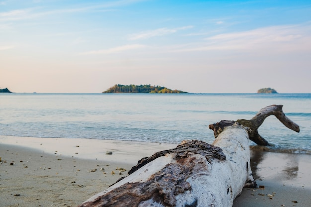 Le vieux journal sur la plage au bord de la mer