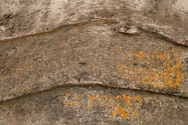 Vieux mur en bois gris grunge avec de la mousse