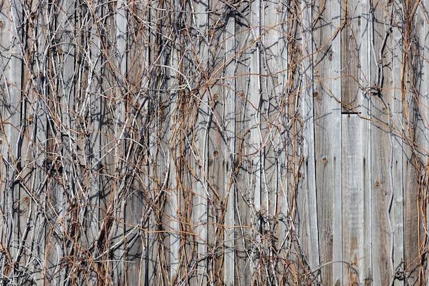 Vieux mur en bois avec lierre flétri